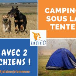 Le camping sous la tente avec 2 chiens : une aventure 100% Bibou Addict !
