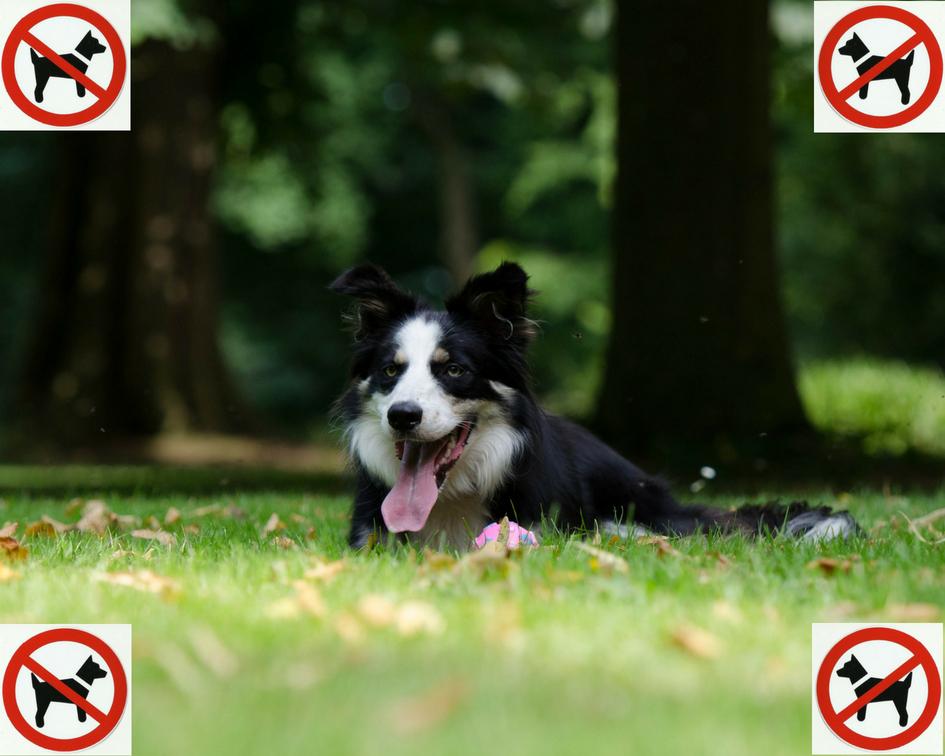 Être hors la Loi en promenant son chien dans un parc public