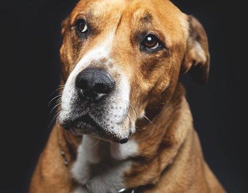 Comment peut-on abandonner un chien ?