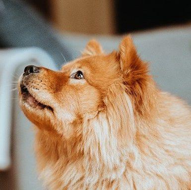 Les motifs d'abandon du chien, des excuses bidons ?