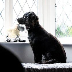 Où commence la maltraitance du chien ?